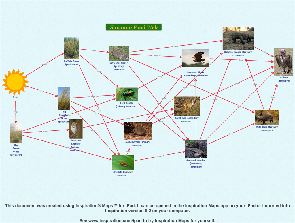 Food Web - Komodo Dragon Conservation